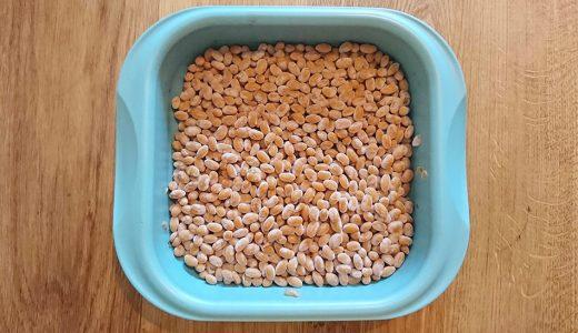 手作り納豆は財布に優しい。しかもエコ。しかもヴィーガン。
