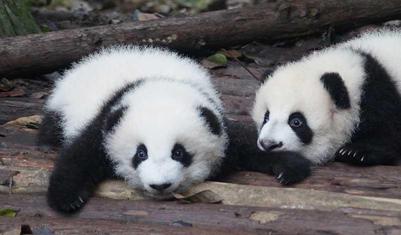 WWFの以前のイメージ
