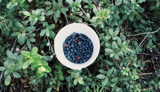 森でブルーベリー摘み中毒になった夏と「洗面器でヤギごはん」【過去記事】