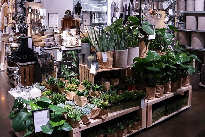 観葉植物、ガーデニング用品
