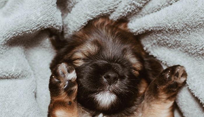 söpö koira